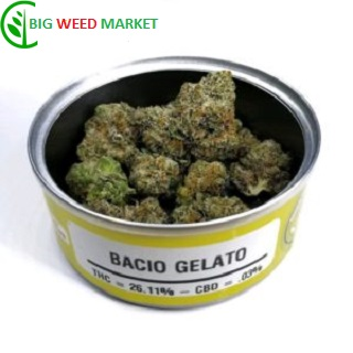 Buy Bacio Gelato Weed Tin Online UK