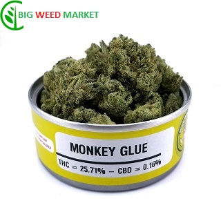 Buy Monkey Glue Weed Tin Online Fr
